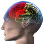 Traumatic Brain Injury Illustration